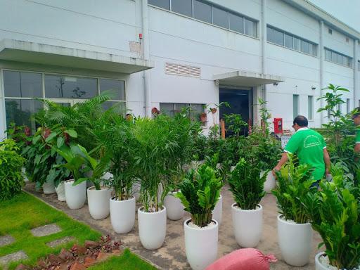Dịch vụ vận chuyển cây xanh giá rẻ và uy tín